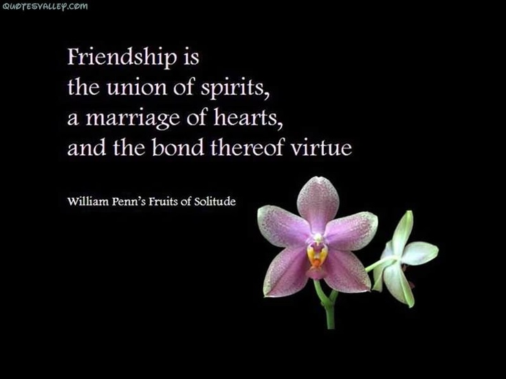 Famous Quote About Friendship Unique 20 Famous Quote About Friendship Photos & Images  Quotesbae
