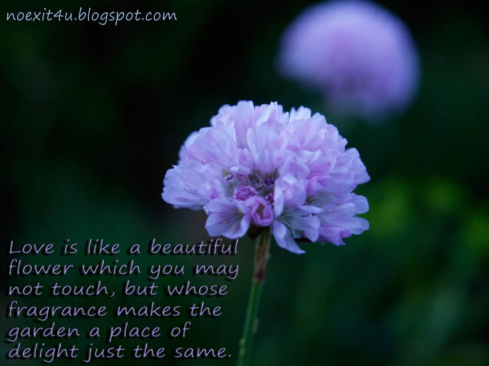 Flower And Love Quotes Flower And Love Quotes 18  Quotesbae