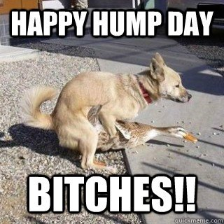 Happy Hump Day Bitches!!