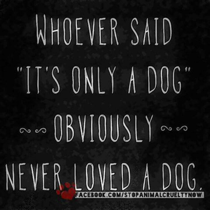 I Love My Dog Quotes Custom I Love My Dog Quotes 13  Quotesbae