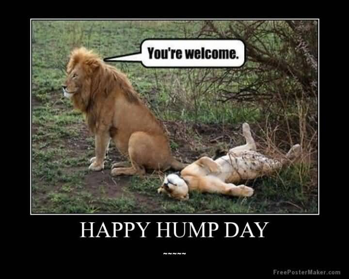 You're Welcome Happy Hump Day