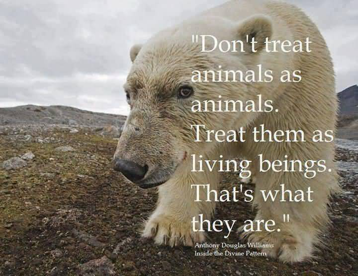Love Animal Quotes Pleasing 20 Love Animal Quotes Images Pictures & Sayings  Quotesbae