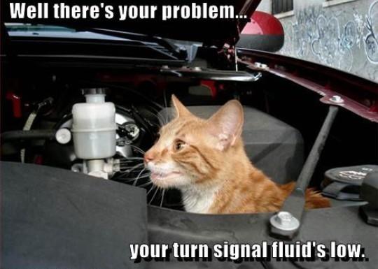 Blinker Fluid Meme Funny Image Photo Joke 14