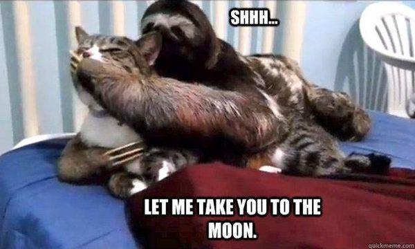 Funniest best rapist sloth meme image