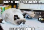 Monday Cat Meme Funny Image Photo Joke 14