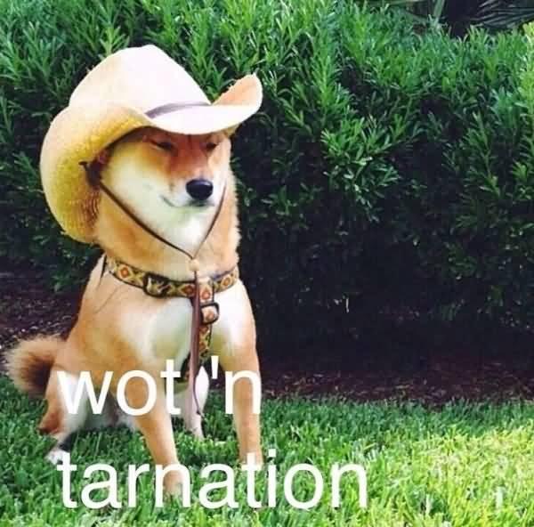 What In Tarnation Meme Funny Image Photo Joke 06