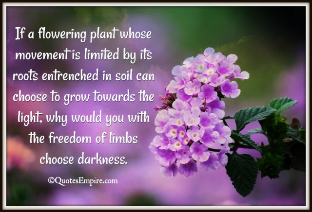 9fa916d096b0 If a flowering plant whose movement is limited by its roots entrenched in  soil can choose to grow towards the light, why would you with the freedom  of limbs ...