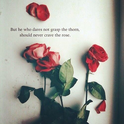 Falling Snow Wallpaper Note 3 Top 25 Rose Day Quotes Quoteshumor Com