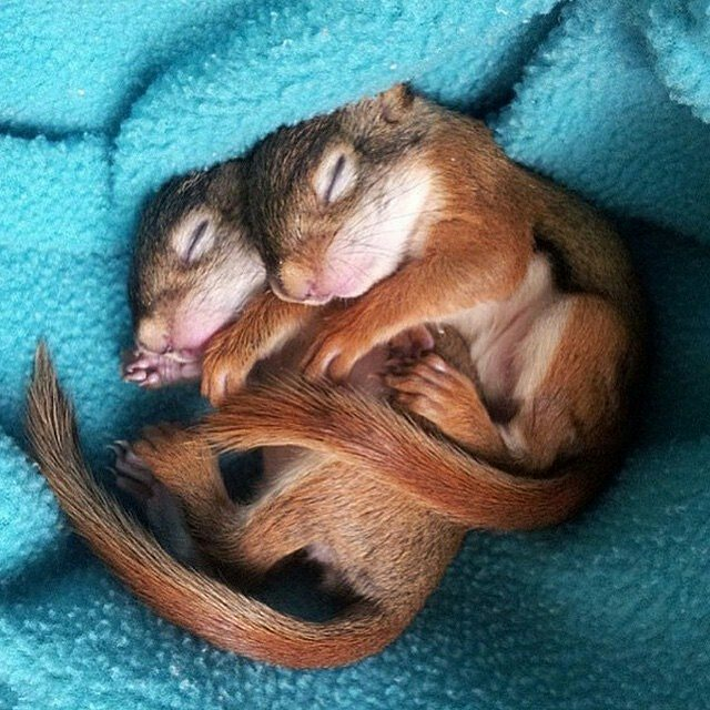 Sleeping Wallpaper Quotes 13 Top Cuddly Animal Photos That Will Have You Letting Out