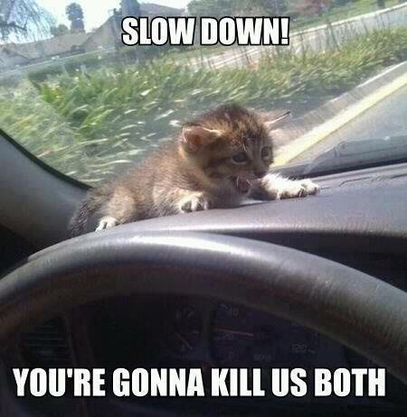 25 Best Funny Animal Quotes And Funny Memes  Quotes And Humor