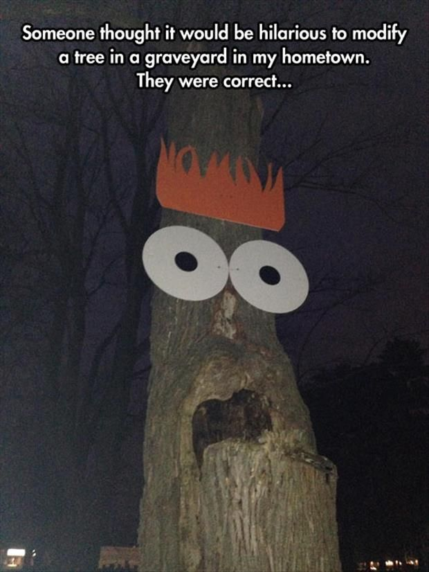 Most funny Jokes Pics