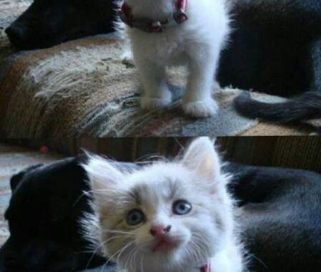 Top 30 Funny Cat Memes Funny Pics