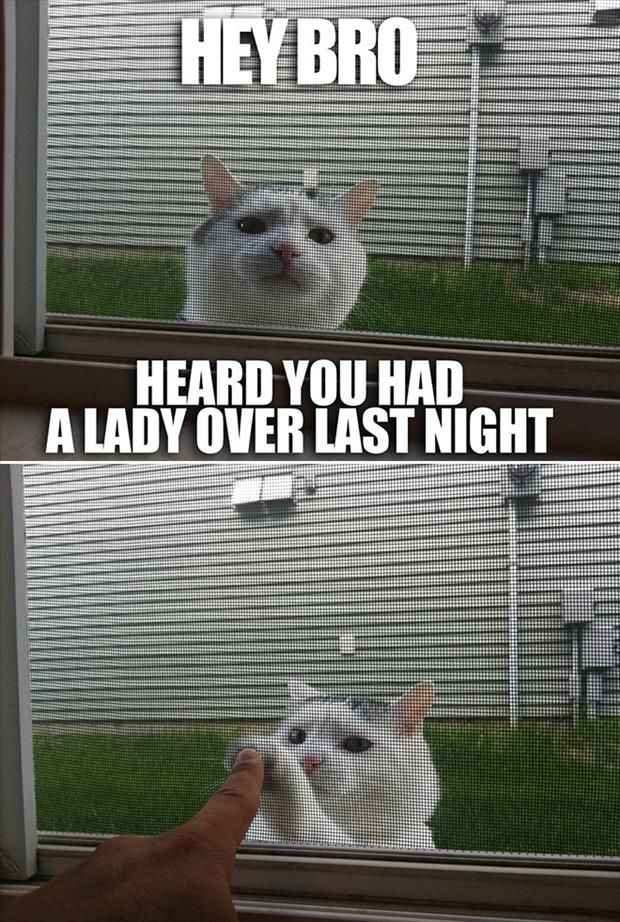 Top 30 Funny Cat Memes #Jokes