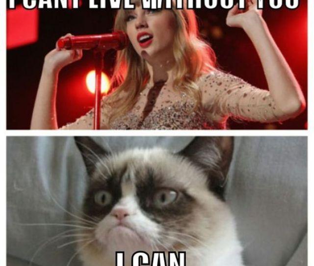 Grumpy Cat Funny Memes Grumpy Cat Grumpy Cat Memes