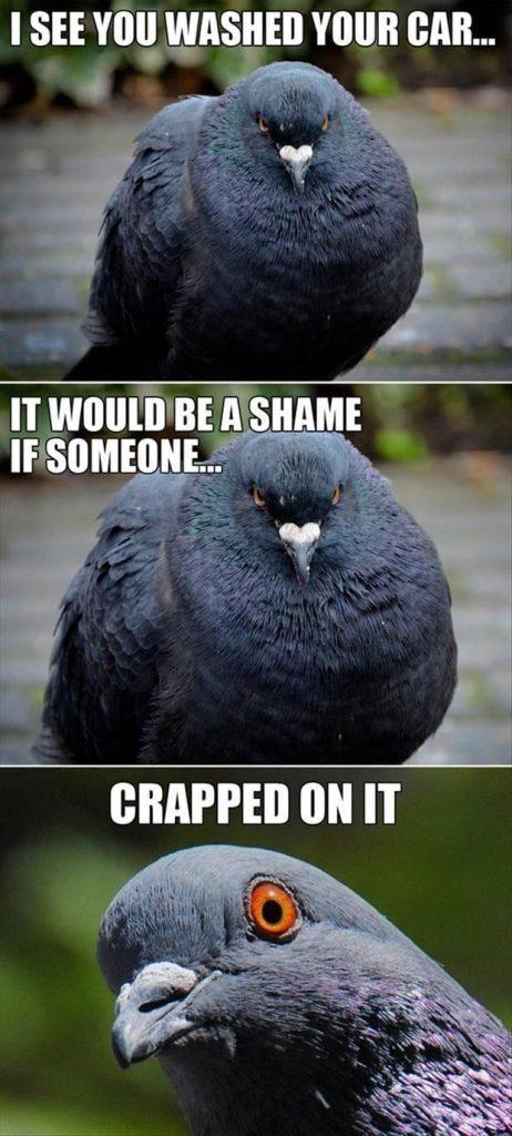 Top 20 Crazy Funny Memes