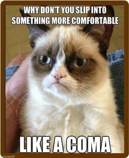 Top 33 Funny Memes Sarcastic Grumpy Cats