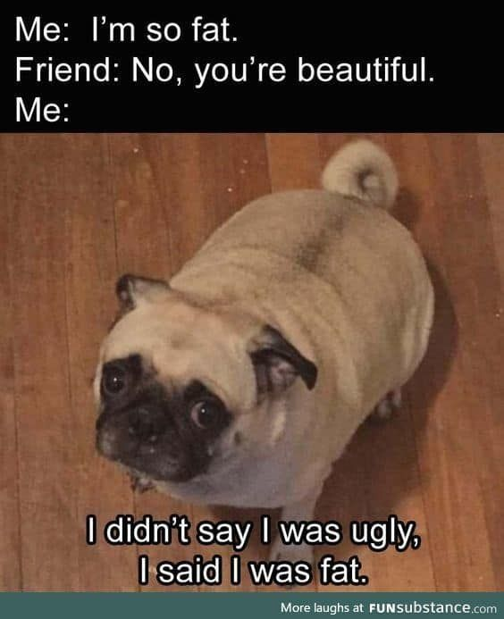 dog memes hilarious