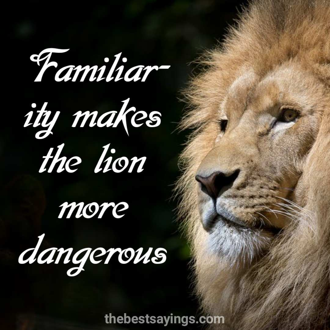 61 Best Lion Quotes and Sayings