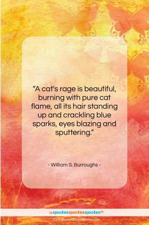 "William S. Burroughs quote: ""A cat's rage is beautiful, burning with…""- at QuotesQuotesQuotes.com"