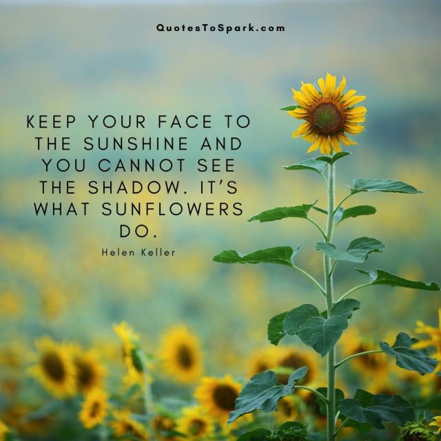 30 Famous Sunflower Quotes and 10 Amazing Facts With Images