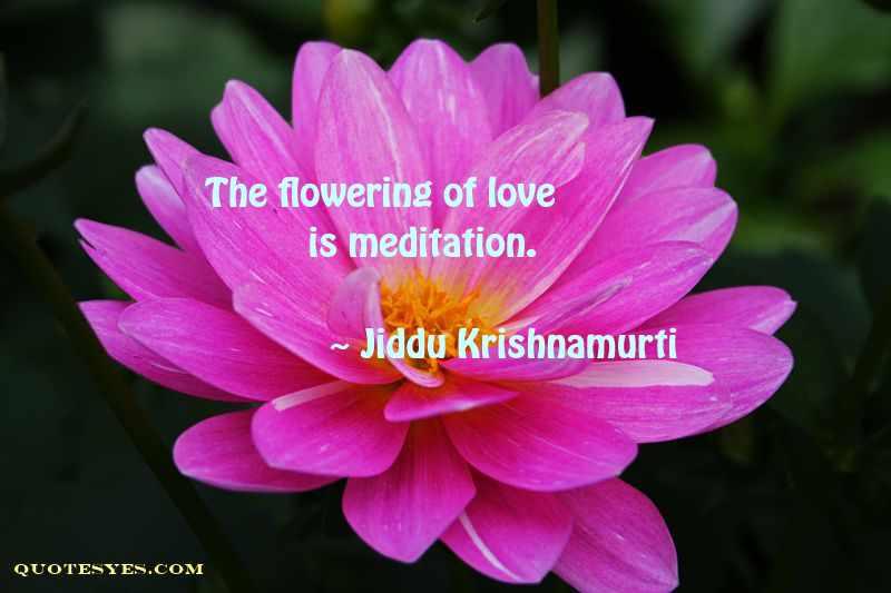 Krishnamurti meditation quote