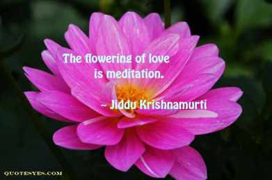 Krishnamurti meditation quote