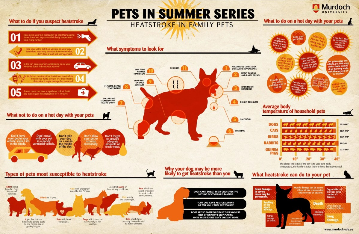 Heat Stroke in Dogs, Cats and Other Family Pets (Infographic)