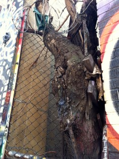 A tree grows in 5 Pointz