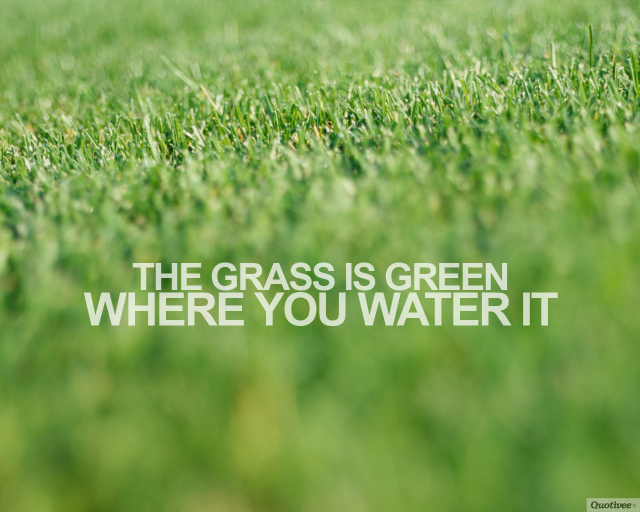 Suits Quotes Wallpaper Mobile The Grass Is Green Inspirational Quotes Quotivee