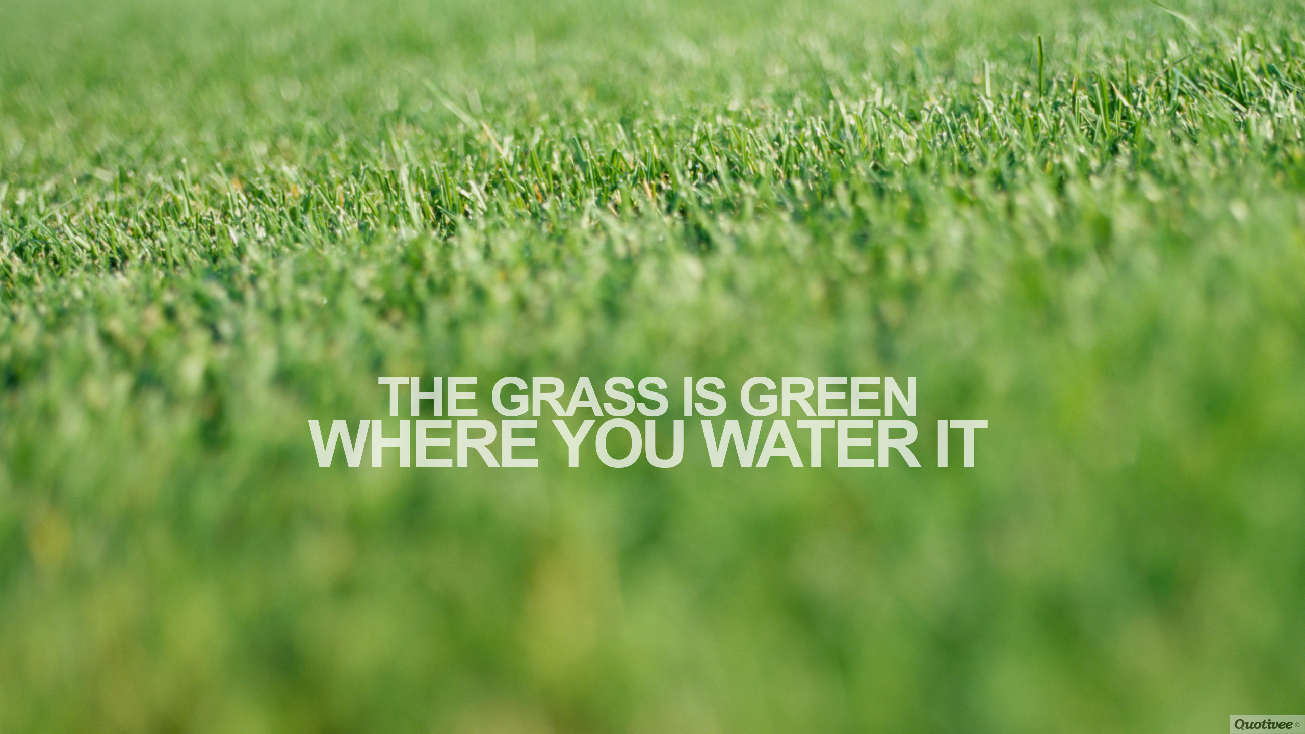 Harvey Specter Quotes Hd Wallpaper The Grass Is Green Inspirational Quotes Quotivee
