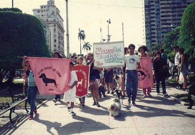 Aprueban Decreto-Ley de Bienestar Animal en Cuba