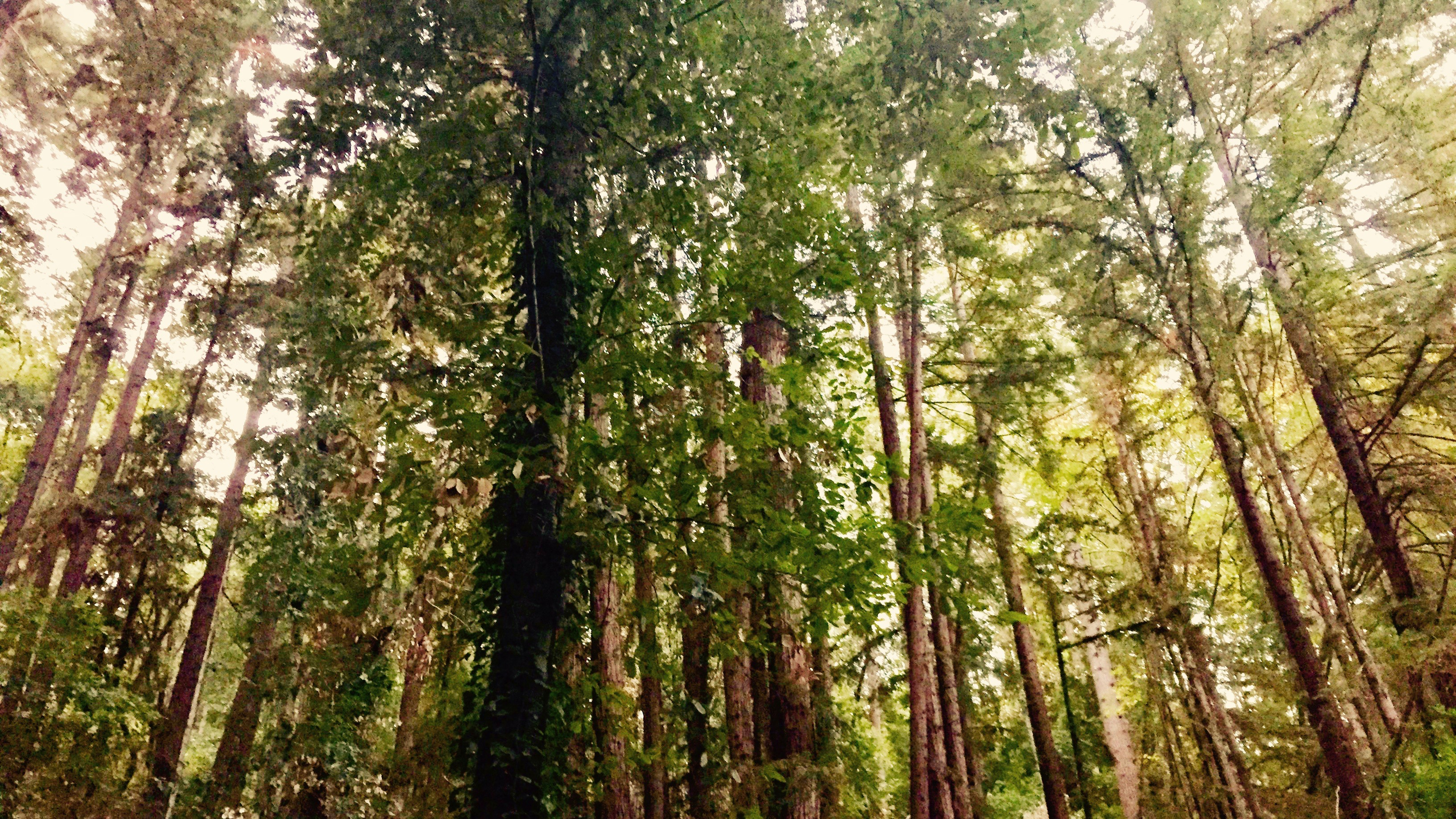 A Biologist Believes That Trees Speak A Language We Can