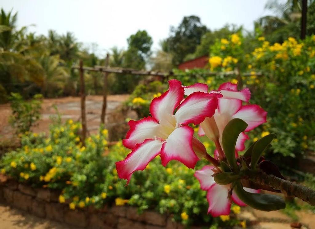 Homestay Akshay Residency Ratnagiri India Booking Com