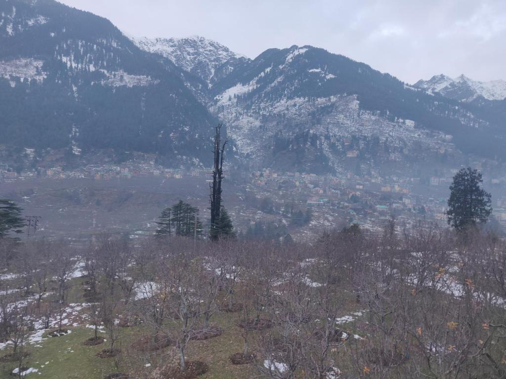 Mountain Face Cottage Manali India Booking Com