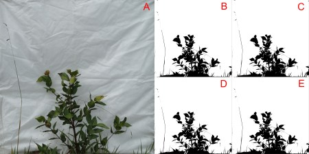 Using bwimge R package to describe patterns in images of natural structures
