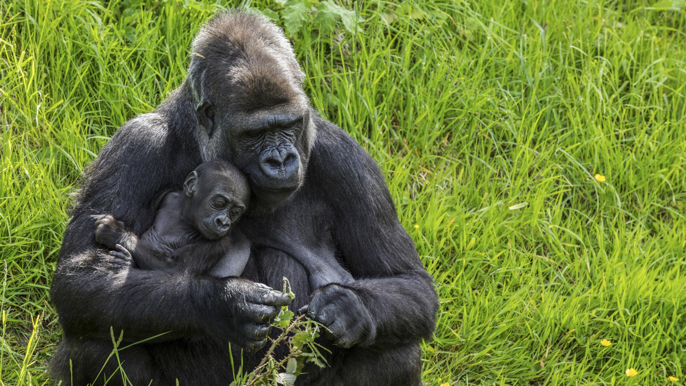 Top 10 Animals That Exhibit Human Behavioral Traits Animal Planet