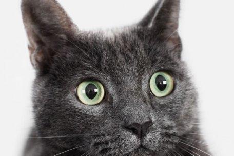 cat eyes vision animal