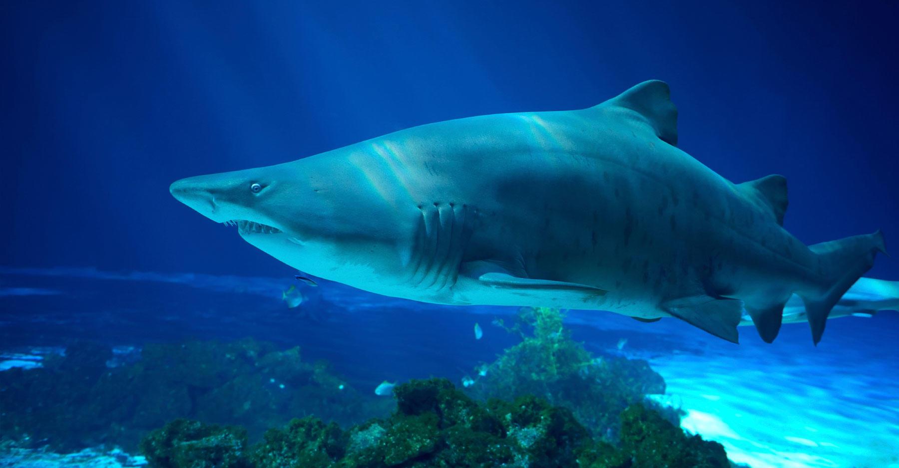 Dubai Aquarium Launches Program To Breed Threatened Sand