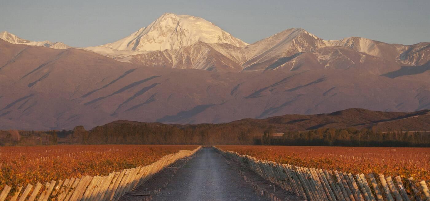 Terrazas de los Andes fine vintages  Wines  Spirits  LVMH