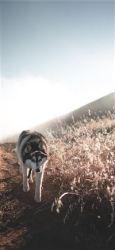 Best Wolf iPhone 11 Wallpapers HD [2020] iLikeWallpaper