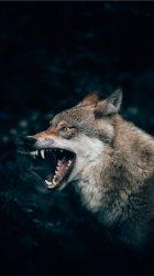Best Wolf iPhone 8 Wallpapers HD [2020] iLikeWallpaper