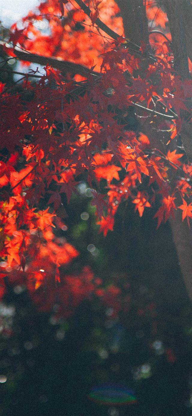 Fall Out Boy Iphone 5c Wallpaper Fall Tree Autumn Nature Iphone X Wallpaper Download