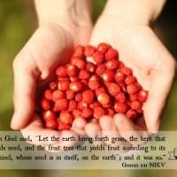 Scripture Sunday Genesis 1:11