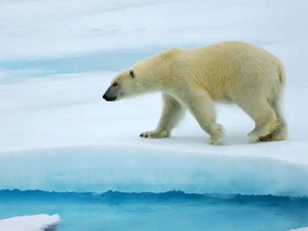https://amolife.com/image/images/stories/Animals/Wild%20Life/polar_bears%20(20).jpg