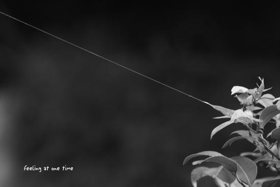 見えない糸