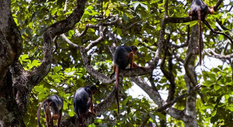 Badius da Guiné, Guiné Bissau, 2008
