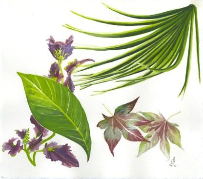 Natural History Illustration 2012
