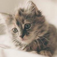 可愛い猫のGIF画像Part 2