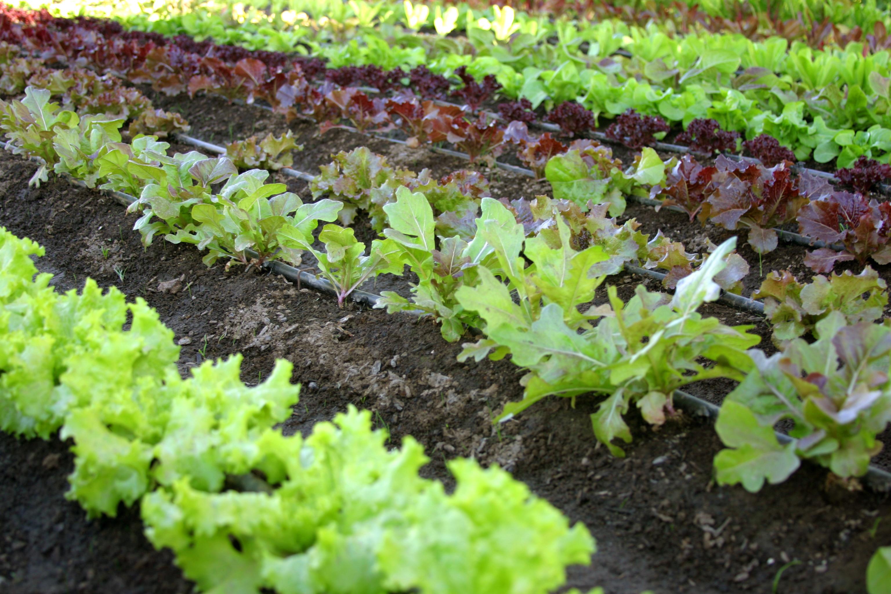 Desktop Gardening, Or Growing Vegetables In Thin Air