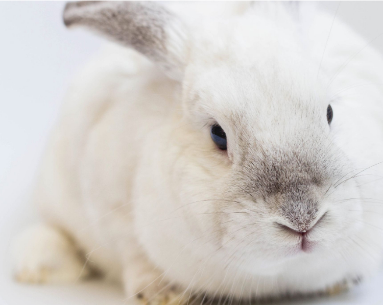 About Rabbit Food